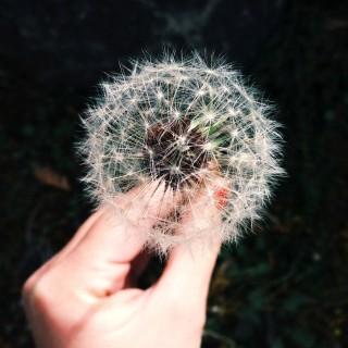 Wish. Dream. Plan. Repeat.